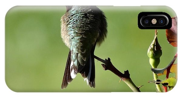 Hummingbird Visits At Sunrise IPhone Case
