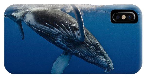 Surface iPhone Case - Humpback Whale Calf, Reunion Island by C??dric P??neau