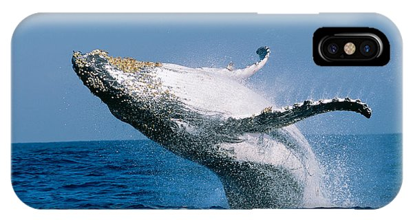 Whales iPhone Case - Humpback Whale Megaptera Novaeangliae by Panoramic Images