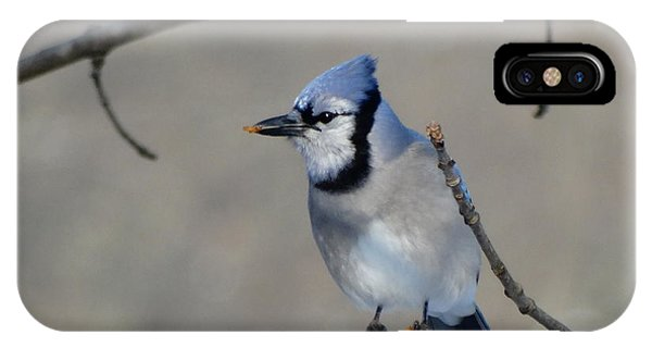 Hungry Blue Jay IPhone Case