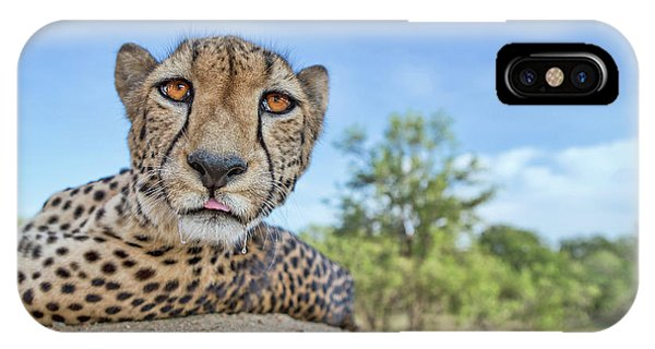 Hungry Cheetah IPhone Case