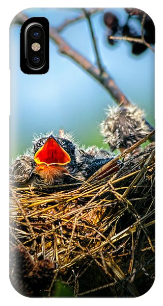 Swallow iPhone Case - Hungry Tree Swallow Fledgling In Nest by Bob Orsillo