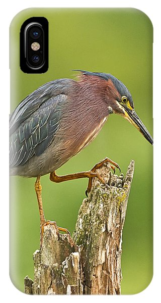Hunting Green Heron IPhone Case