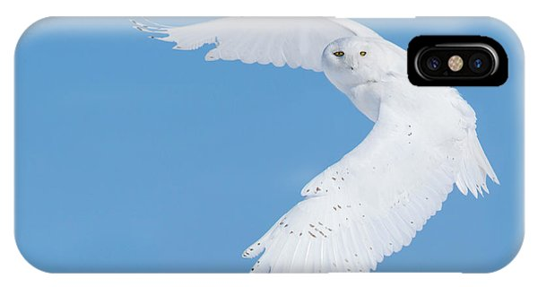 Hunting Snowy Owl Phone Case by Mircea Costina