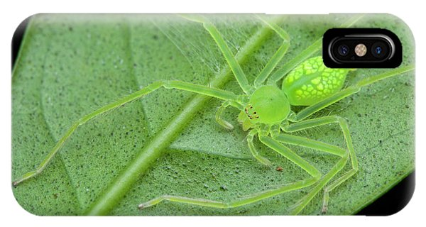 Huntsman Spider On Leaf Phone Case by Melvyn Yeo
