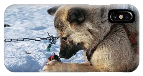 Sled Dog iPhone Case - Husky Dog Eating by Simon Fraser/science Photo Library