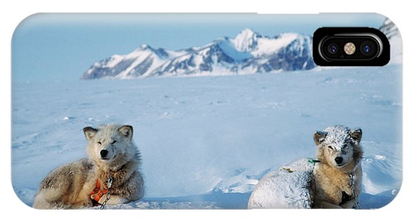 Sled Dog iPhone Case - Husky Sled Dogs by Simon Fraser/science Photo Library