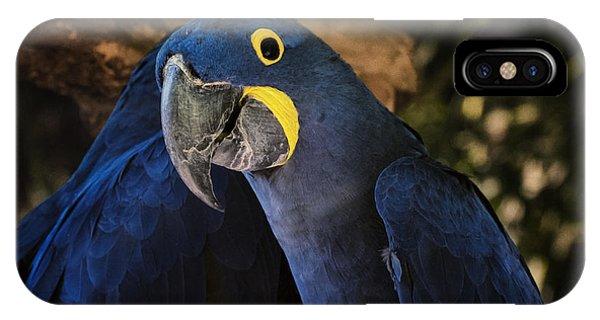 Macaw iPhone Case - Hyacinth Macaw by Joan Carroll