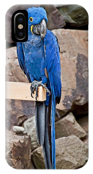 Hyacinth Macaw Parrot Bird Art Prints IPhone Case