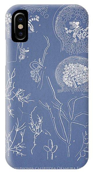 Alga iPhone X Case - Hyalosiphonia Caespitosa Okamura Valonia Confervoides by Aged Pixel