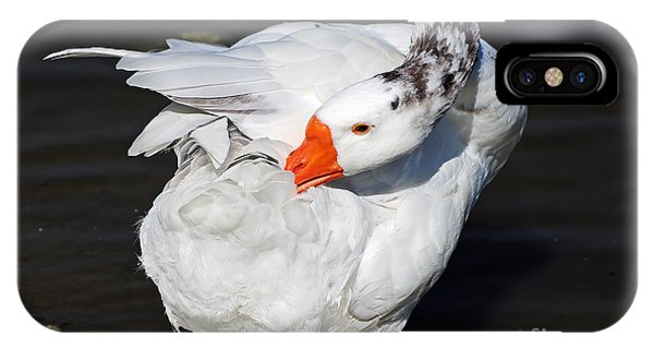 Hybrid Goose Grooming After A Swim IPhone Case