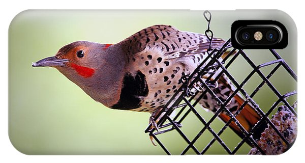 Northern Flicker iPhone Case - Intergrade Red Shafted And Yellow Shafted Northern Flicker Male by Sharon Talson