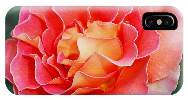 Hybrid Tea Rose  IPhone Case