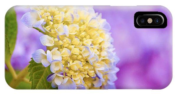 Hydrangea On Purple IPhone Case