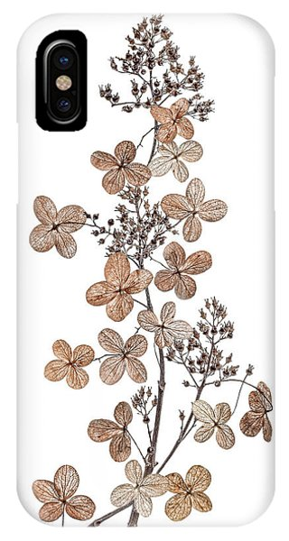 Season iPhone Case - Hydrangea Paniculata by Mandy Disher