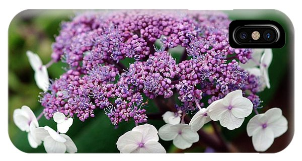 Deciduous iPhone Case - Hydrangea Sargentiana by Brian Gadsby/science Photo Library