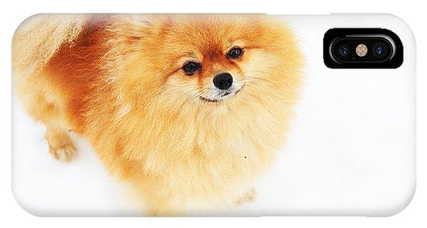 Pomeranian iPhone Case - I Am Here I by Jenny Rainbow