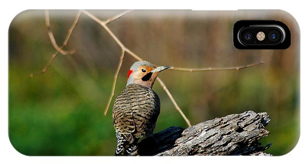 IPhone Case featuring the photograph I See You by David Armstrong