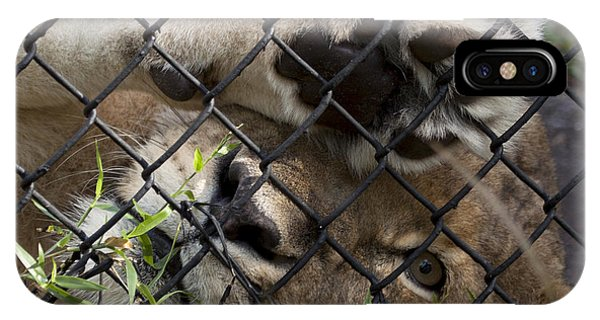 I Want To Go Home - Female African Lion IPhone Case