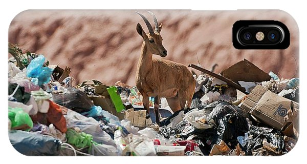 Ibex In City Dump Phone Case by Photostock-israel