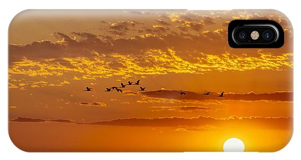 IPhone Case featuring the photograph Ibis Flyover At Sunset by Rob Graham