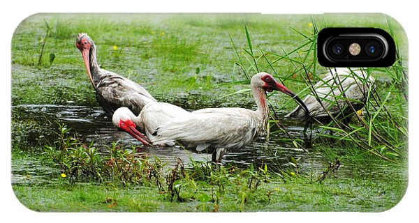 Ibis In Willow Pond IPhone Case