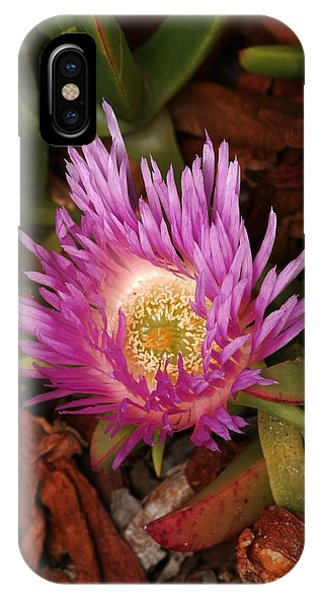 Ice Plant San Diego IPhone Case