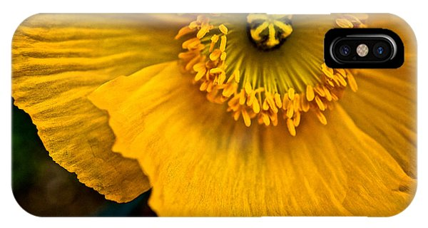 Iceland Poppy In Yellow IPhone Case