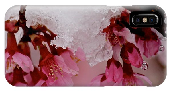 Icy Cherry Blossoms IPhone Case