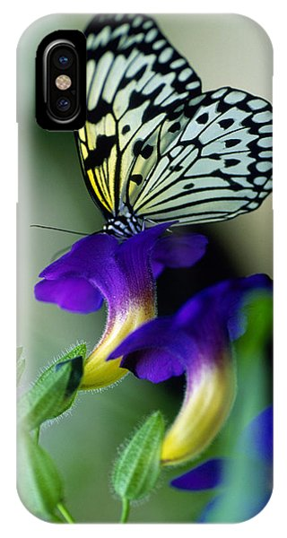 Idea Lecomoe Tree Nymph Butterfly On IPhone Case