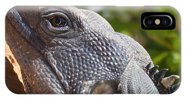 Iguana Closeup IPhone Case