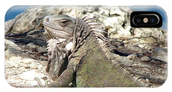 Iguana In The Sun IPhone Case