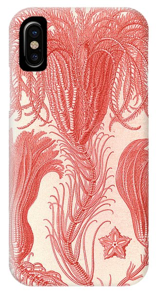 Illustration Shows Marine Animals. Crinoidea Phone Case by Artokoloro