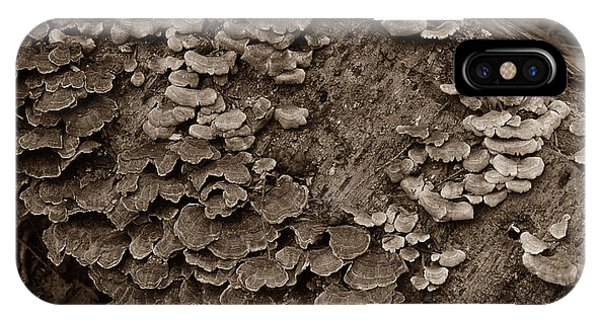 IPhone Case featuring the photograph Im Lichen It by Michael Kirk