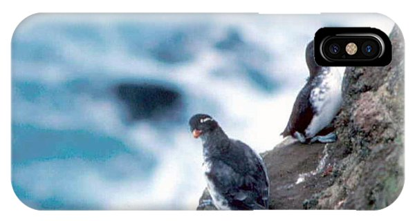 Auklets iPhone Case - I'm Not Talking To You Either by F Hughes