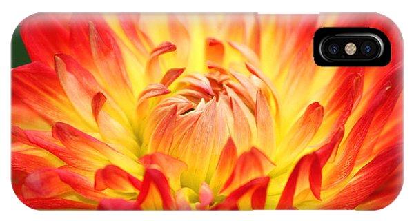 Img 0023 Flor En Rojo Detalle IPhone Case