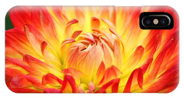 Img 0023 Flor En Rojo Detalle IPhone Case