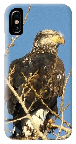 Immature Bald Eagle IPhone Case