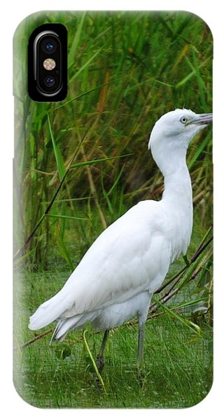 Immature Little Blue Heron IPhone Case