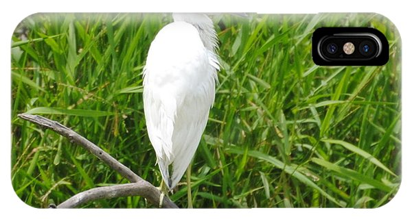 Immature Little Blue Heron On Watch IPhone Case