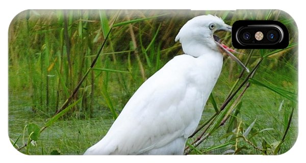 Immature Little Blue Heron Yawning IPhone Case