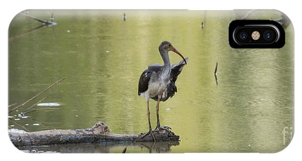 Lake Juliette iPhone Case - Immature White Ibis by Donna Brown