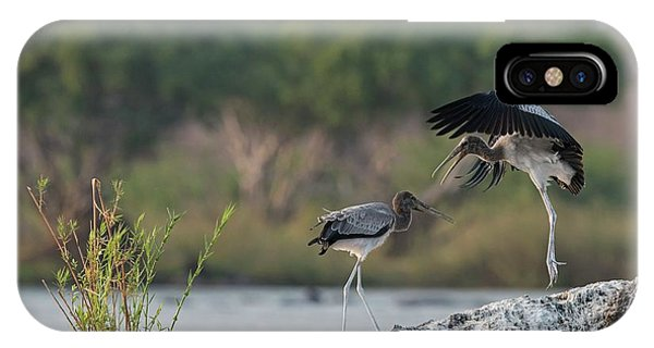 Immature Yellow-billed Storks At Play Phone Case by Tony Camacho/science Photo Library