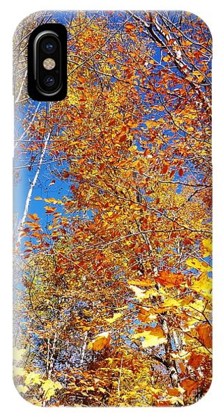 In The Forest At Fall IPhone Case