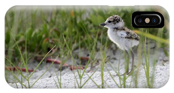 In The Grass - Wilson's Plover Chick IPhone Case