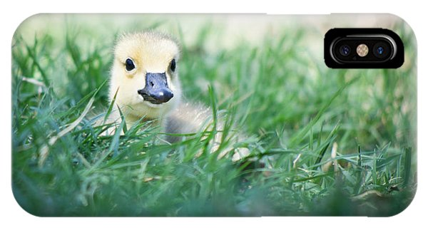 IPhone Case featuring the photograph In The Grass by Priya Ghose