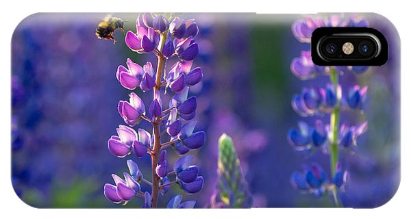 In The Land Of Lupine IPhone Case