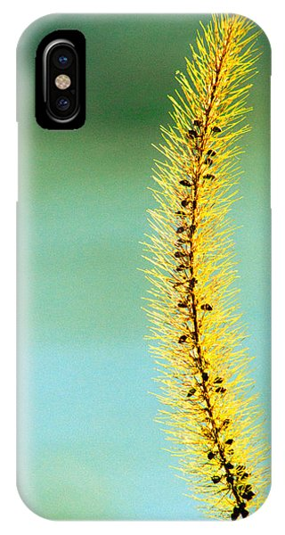 Plants iPhone Case - In Time by Bob Orsillo