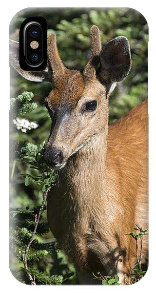 Mule Deer iPhone Case - In Velvet by Mike Dawson