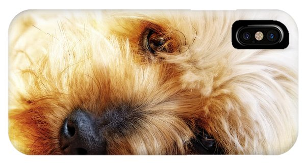 In Your Yorkie Dreams IPhone Case